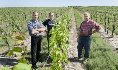 Grape Growers of Ontario